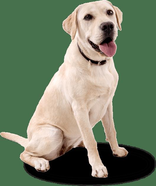 canine-nutrition-dog