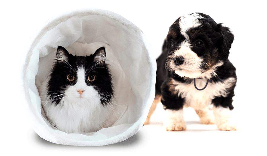 puppy-kitten-nutrition